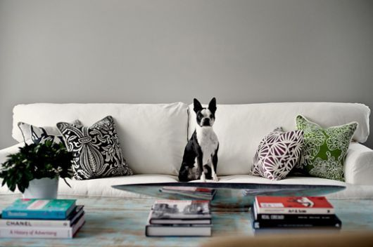 Home Tips for Pet Owners @ MyDecorative.Com by @Himanshu Shah via @My Décorative