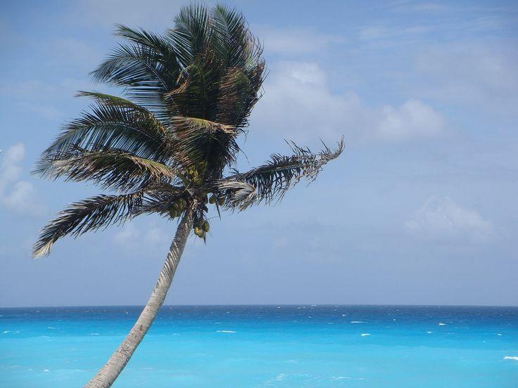 ¿Te imaginas pasar un rato volando, para llegar a un destino paradisíaco de aguas cristalinas y arenas blancas? Cancún, Riviera Maya, Holbox, y muchos destinos más deslubran a más de un turista. Sin embargo, Playa del Carmen es el lugar preferido por la mayoría. Buscá Hoteles en Playa del Carmen aquí, y dejate sorprender:  http://www.bestday.com.ar/Playa_del_Carmen/ReservaHoteles/
