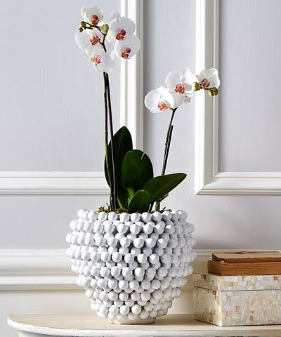 Pompon Vase and Planter