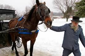 Afbeeldingsresultaat voor chester van de Amish