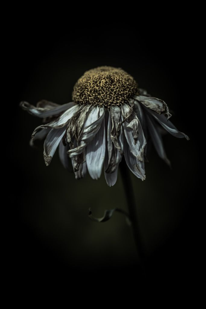 Feeling frazzled in a delighted way by alan shapiro photography