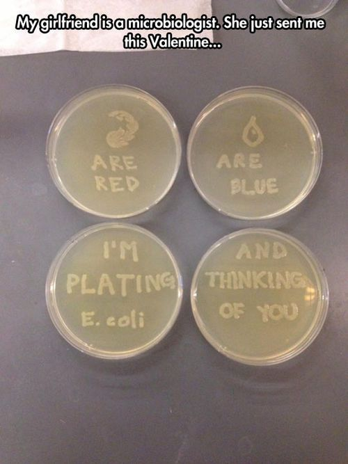 Microbiologist love