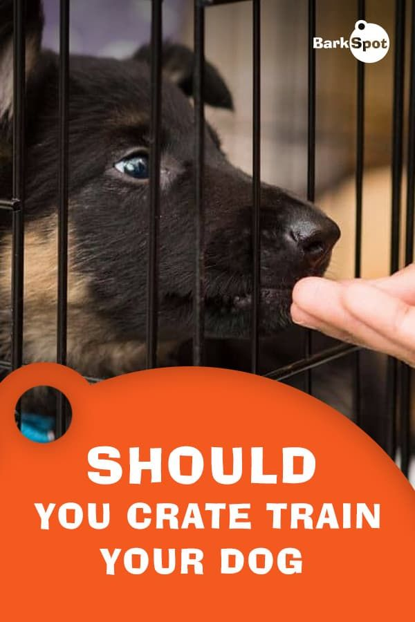 Crate Training Is A Complicated Topic In The Dog World Some