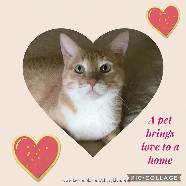 We adopted our tabby from the @azhumane When you welcome a pet into your heart, you invite love into your home. Adopt an animal and save a life. #catsofinstagram #cats #petsofinstagram #adoptapet #humanesociety #mustlovecats #pets #loveanimals