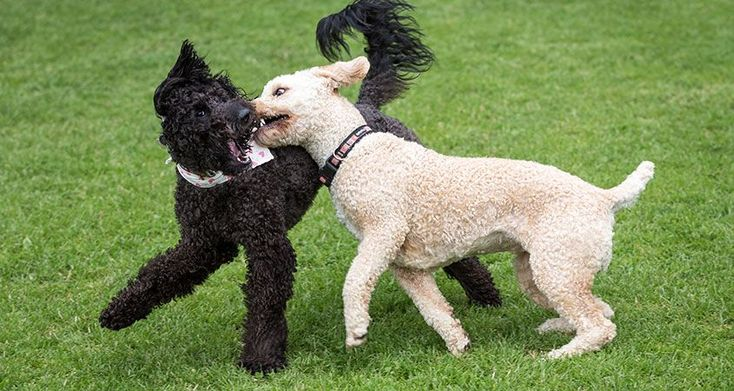 Control a hyper dog calming overexcited dogs cesars