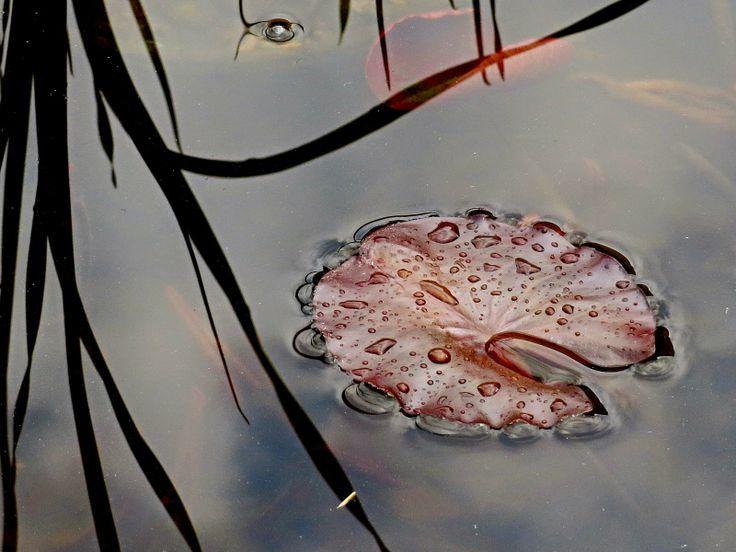 Dívám se okolo - fotoblog: Májové květy