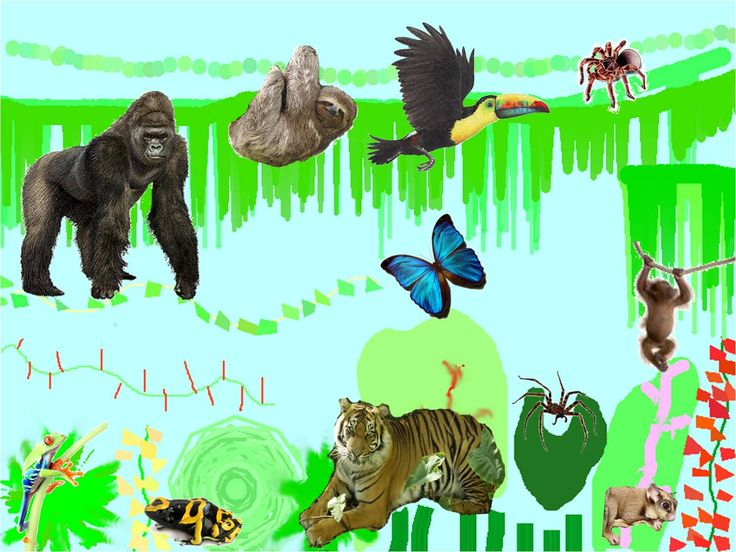 Otto's Jungle