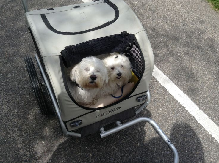 Easy dogtransport behind your bicycle