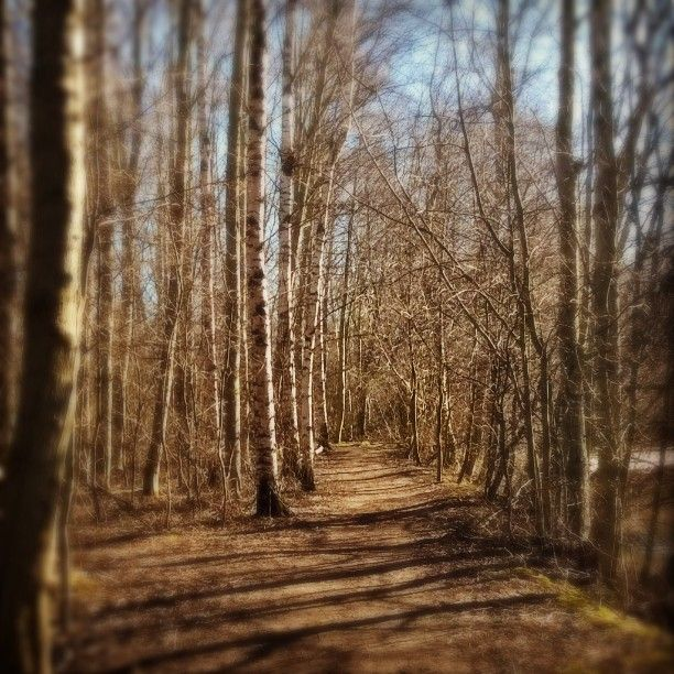 Kevään vihreyttä odotellessa. #Porinkansallinenkaupunkipuisto #kaupunkipuisto #Hanhiluoto #Pori #polku #puut #lehdetön #kevät