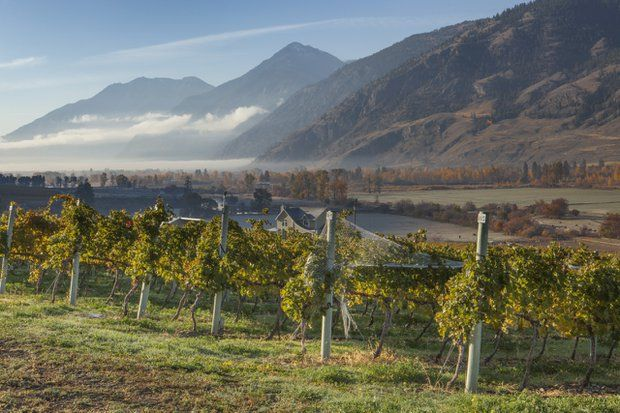 From Vision to Vineyard: A look at former Yukoner George Hanson's award-winning Seven Stones Winery.