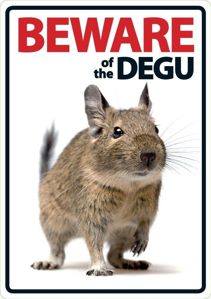 Beware of the Degu