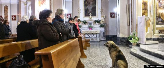 Ciccio, Italian Dog, Attends Mass Every Day At Dead Owner's Church