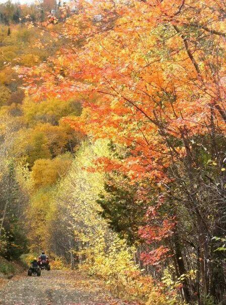 Four wheeling on the mountain enjoying the beautiful fall foliage