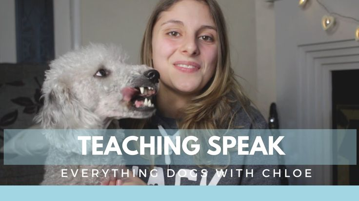 HOW TO TRAIN YOUR DOG TO SPEAK - 4 EASY STEPS
