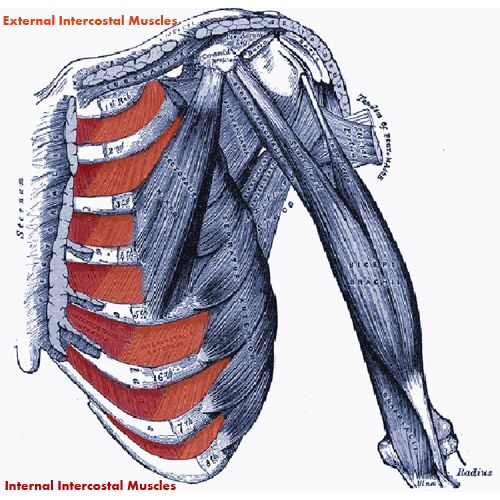 15 best Chapter 22: The Respiratory System images on Pinterest ...