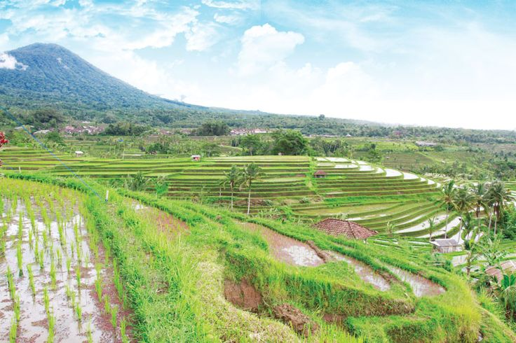 """""""An amazing day-trip program fueled by Waka Hotels & Resorts, WakaLandCruise takes you to discover Bali through lush countryside, stunning rice terrace and majestic Balinese temple."""""""