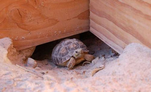 how to take care of tortoise at home
