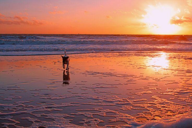 Sunset & Jack