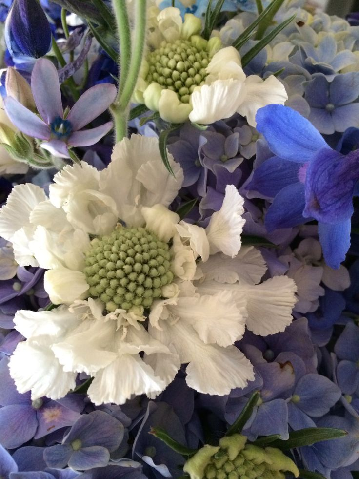 A picture of perfection! Locally grown flowers- white scabiosa, blue delphinium, light blue tweedia, blue hydrangeas. ASTARR Events buys locally grown flowers direct from the farmer saving the client money and keeping local dollars at home!