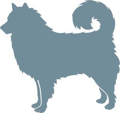 Hvordan så oldtidens hunde ud? Også i bondestenalderen og bronzealderen var hunde en fast del af husdyrholdet. De hunde, vi finder fra disse perioder, er hovedsageligt af hyrdehunde-typer. Fra bondestenalderen har man flere eksempler på hunde af racen nordisk spidshund, mens noget større hunde igen begynder at vinde indpas i bronzealderen.  De første hunde i Danmark var sandsynligvis af spidshunderacen.