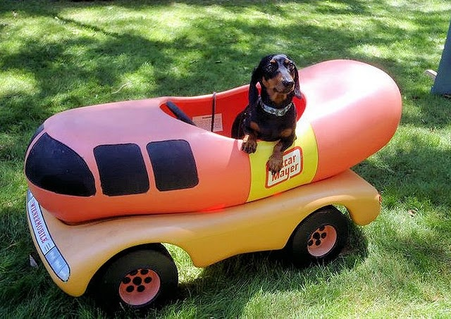 oh i wish i were an oscar mayer weiner.  #Doxie Darlin' ♥ LOVE