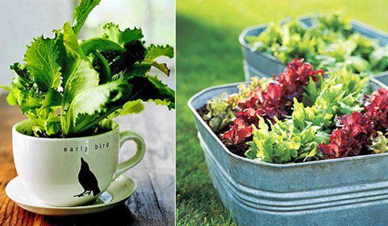 Огород на подоконнике - как вырастить свежую зелень дома | Агентство новостей ТВ2