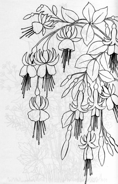 Gallery.ru / Фото #6 - Рисунки для вышивки гладью - natok fucsias