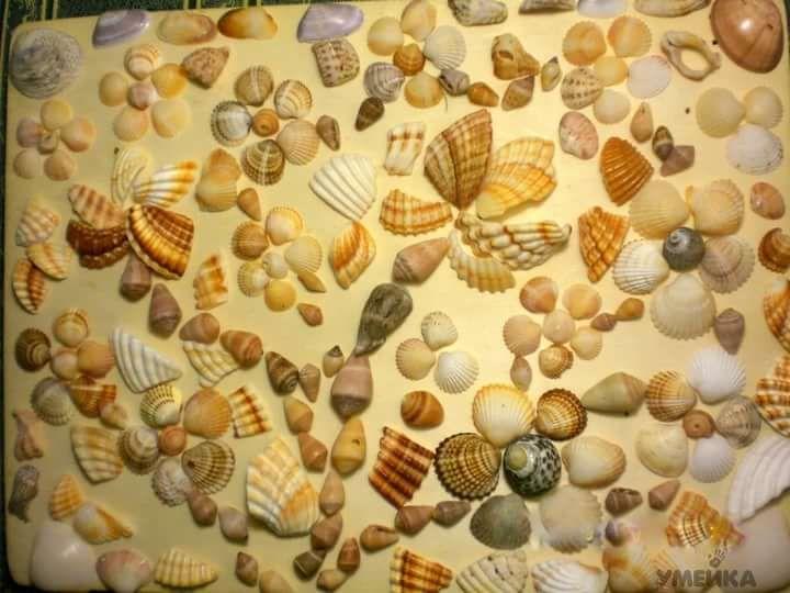 картинки коллекции камней и ракушек своими руками