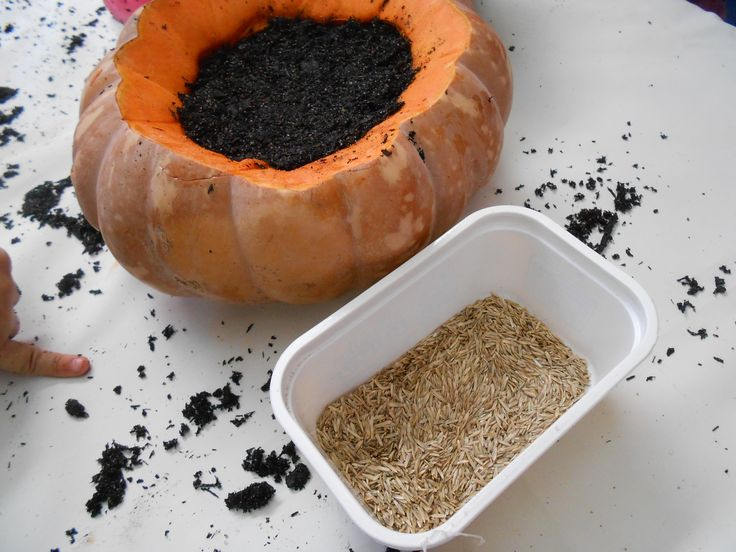 Halloween week - I carved a pumpkin and let children filled it with soil and grass seeds. Will post another photo when our pumpkin grows some hairs! hahaha