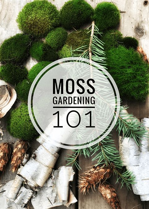 Moss Gardening 101 How To Grow Moss