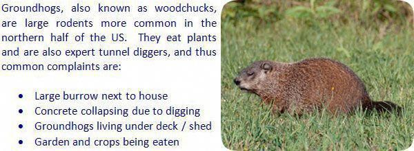 The Basics Of Pest Control Get Rid Of Groundhogs Groundhog Pest Control