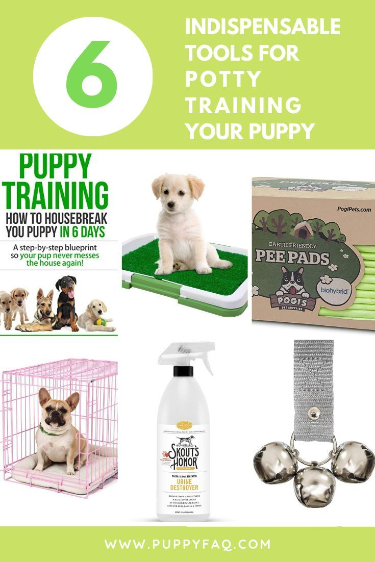 Potty Training A New Puppy Can Be A Challenging Task Especially