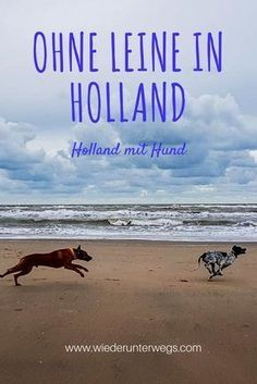 Dog beach Noordwijk: No leash at the kilometer-wide beach in Holland – kurzurlaub