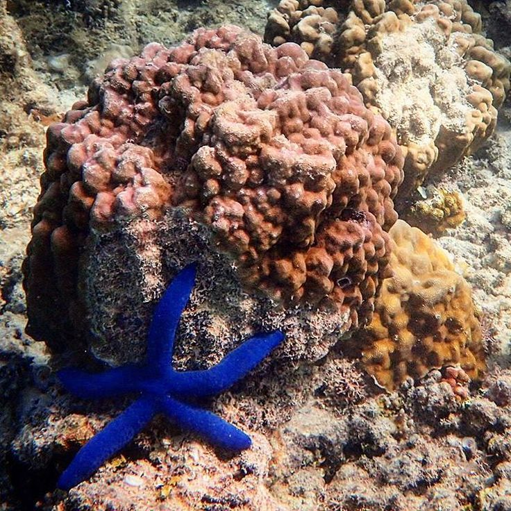 The symmetry found in the starfish is e