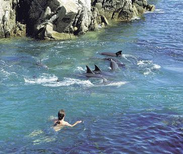 Swimming with dolphins at Plettenberg Bay