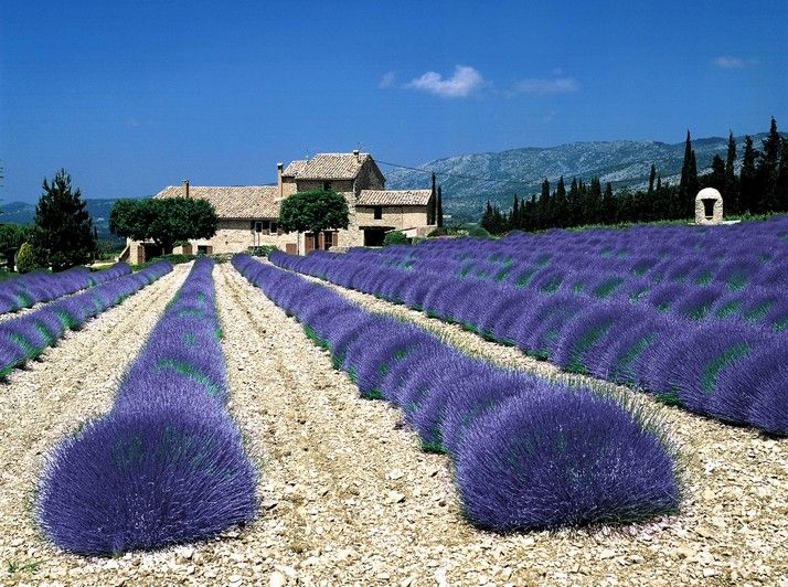 Provence do you smell the lavende?