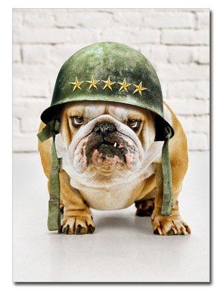 Bulldog in Army Helmet