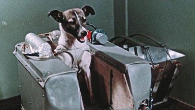 Laika - Por qué la Unión Soviética fue la verdadera ganadora de la carrera espacial (y no Estados Unidos)
