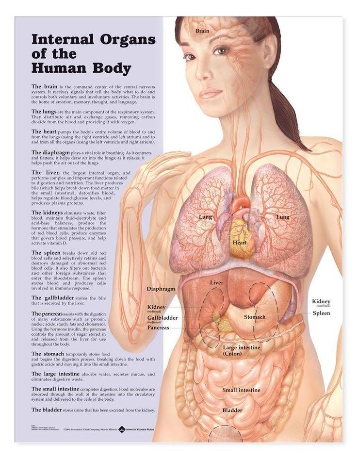 de tag Beitrag Anatomie menschlichen Körper