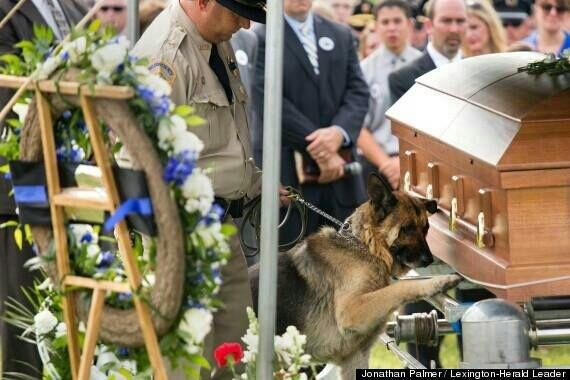 Police Dog, Figo, pays last respects to his fallen partner, Officer Jason Ellis.