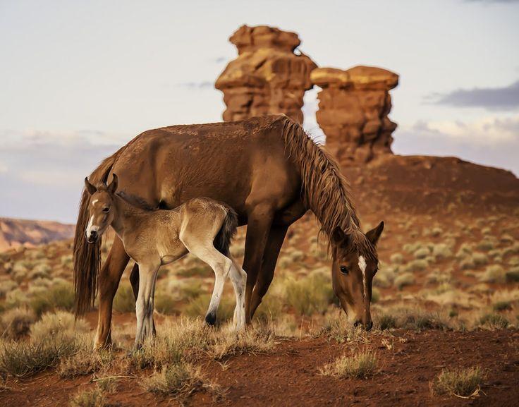 Breathtaking Photos of Horses
