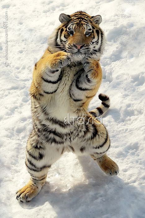 Great shot, looks like he's boxing!