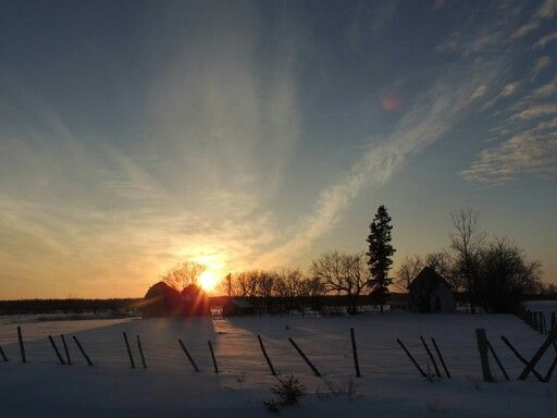 Rural Manitoba by Tammy Jensen Jensennursery.com