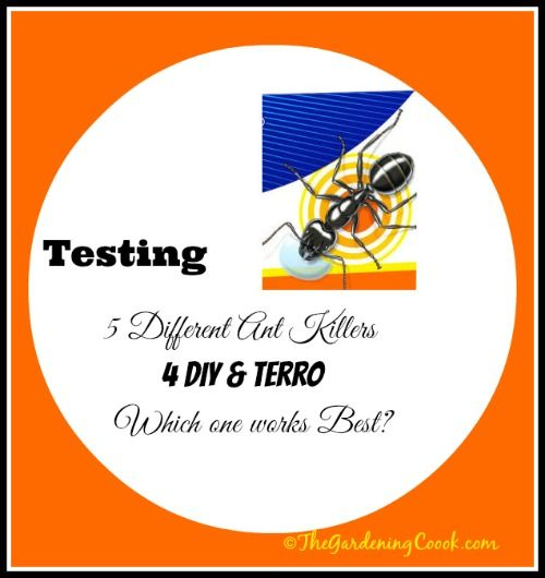 Testing 4 DIY Borax Ant Killer Remedies against Terro - Which ones Work best? - Find out at http://thegardeningcook.com/testing-borax-ant-killer-remedies/