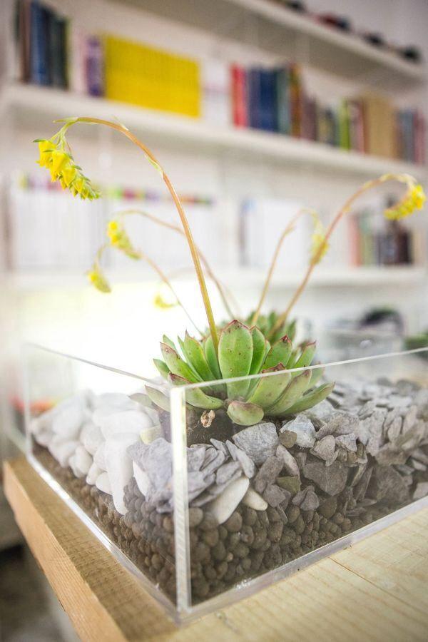 Le 25 migliori idee su giardino di piante grasse su - Composizione piante grasse giardino ...