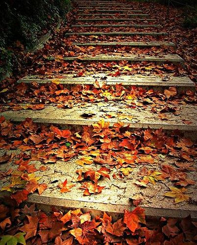 Leaves: Stairs, Autumn Pathways, Autumn Leaves, Crunchi Leaves, Nice Places, Love Ffaaalllll, Bags