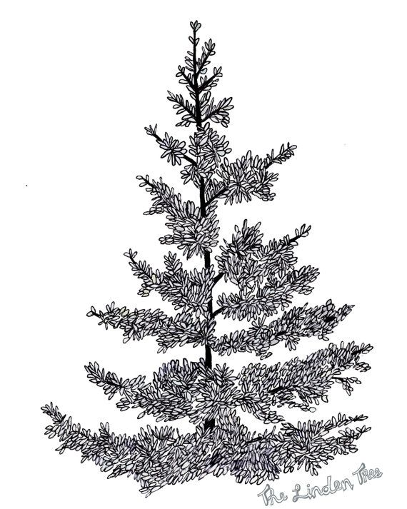 Pine Tree Ink Drawing (digital print) by thelindentree on Etsy, $18.00