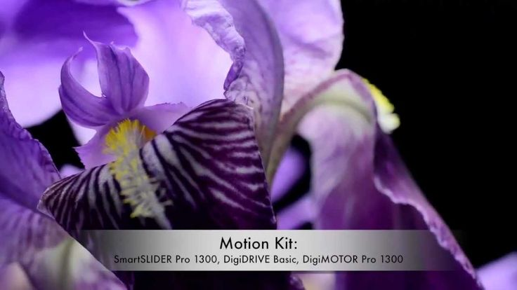 Macro video test made by Marco Vicini using SmartSystem slider with motor SmartSLIDER PRO 1300 and motion control DigiDRIVE Basic. More info at:  http://www.smartsystem.it/products/motion-kit/digidrive/digidrive-basic/