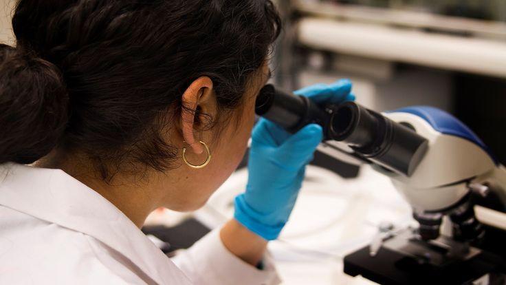 Forskare i Umeå hoppas kunna bota den svåra nervsjukdomen ALS genom att påverka patienternas gener. Metoden ska testas i ett internationellt samarbete ...