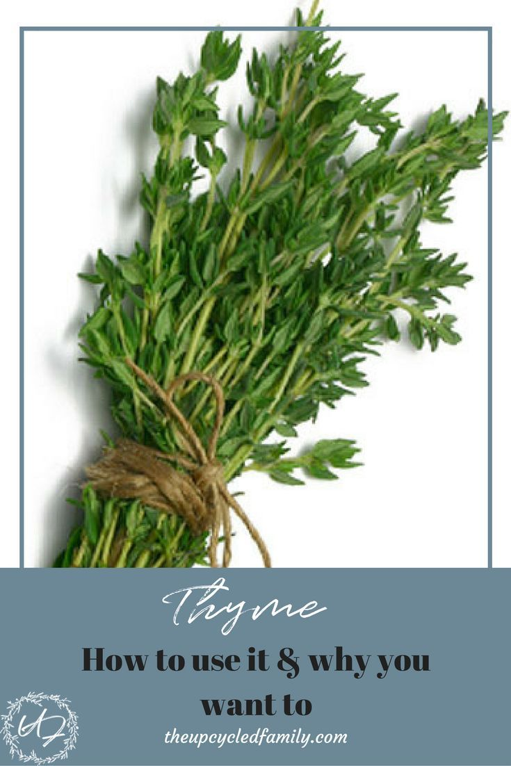 Thyme: beneficial properties of the plant 42